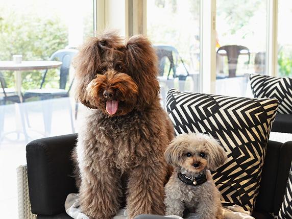 カフェ ドッグ 【東京】ドッグカフェ7選!実際に触れ合える犬カフェを集めてみた♪