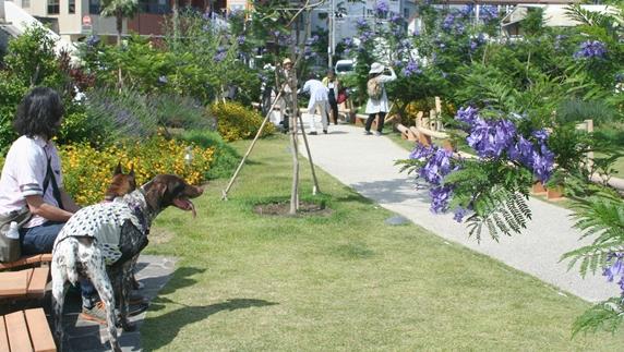 熱海のジャガランダ遊歩道