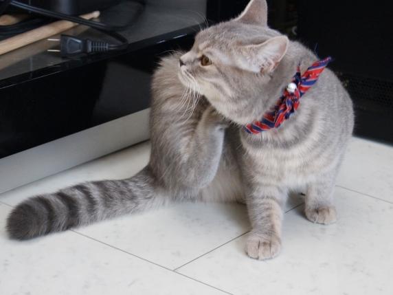 体を掻く猫