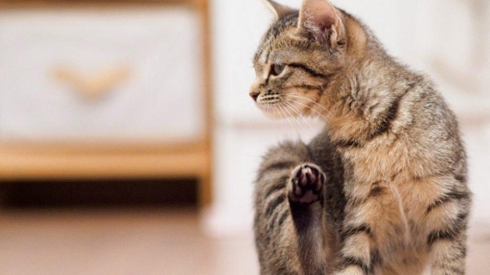 臭い 猫 おしり