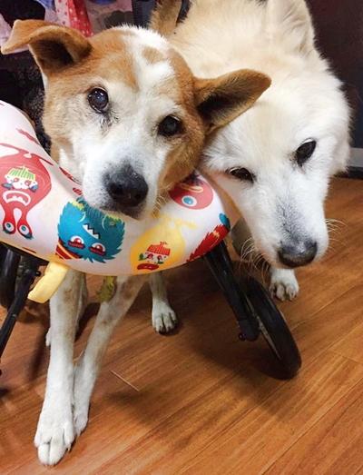 介護 ホーム アスル 老 犬 「老犬ホーム」高まる需要、飼い主の高齢化・介護疲れで 数時間ごとのオムツ交換や投薬、見守りは24時間体制