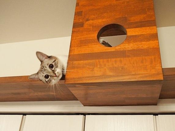 キャットウォークから顔を覗かせる猫