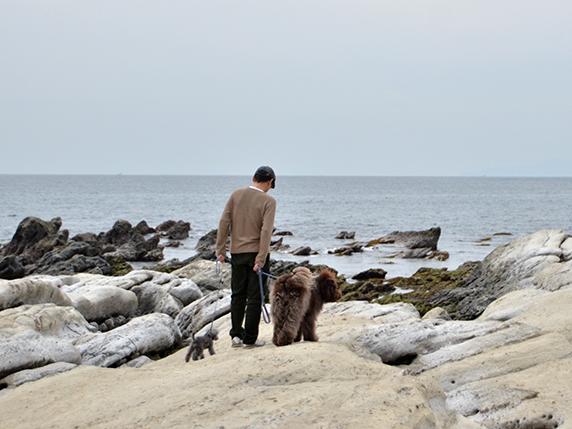 南房総の海辺を散歩するラブラトゥードゥル犬とトイプードル