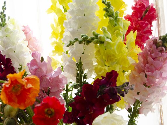 カラフルなストックの花