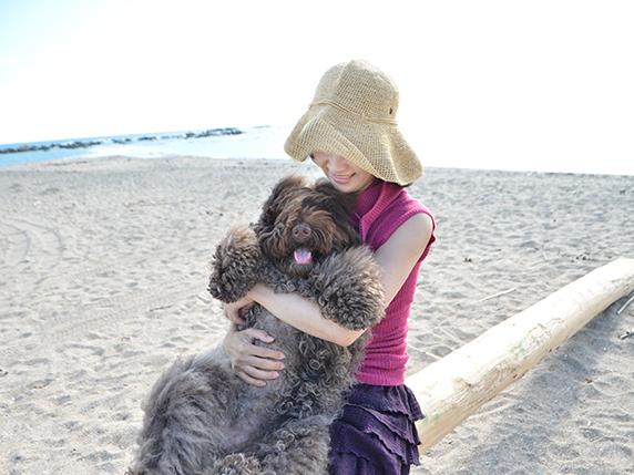 海辺で抱きかかえられるラブラトゥードゥル犬