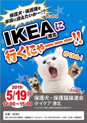 2019年5月19日開催のIKEA港北犬猫譲渡会チラシ