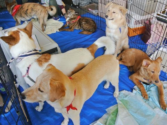 IKEA港北犬猫譲渡会に参加した犬たち