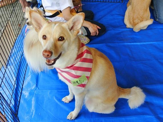 IKEA港北犬猫譲渡会に参加した卒業犬