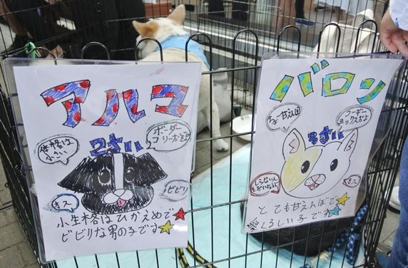 IKEA港北犬猫譲渡会の参加犬を紹介する手書きポスター