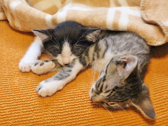 オレンジ色の敷物の上で眠る2匹の猫