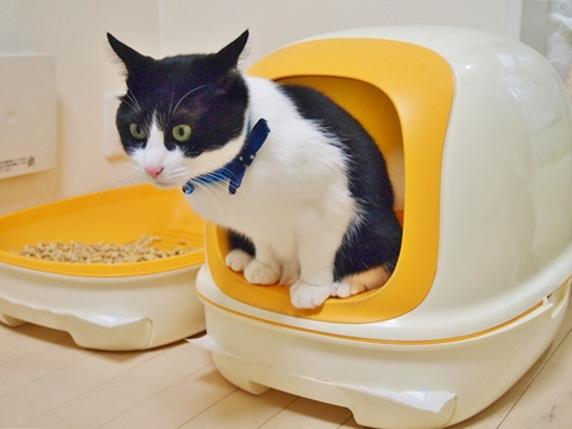 システムトイレで排泄中に頭を出す黒白猫