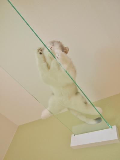 猫共生住宅ichinekoのガラス製キャットウォーク