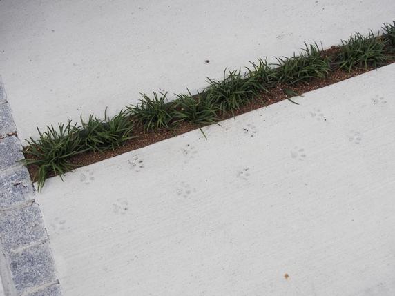 コンクリートに付けられた猫の足跡