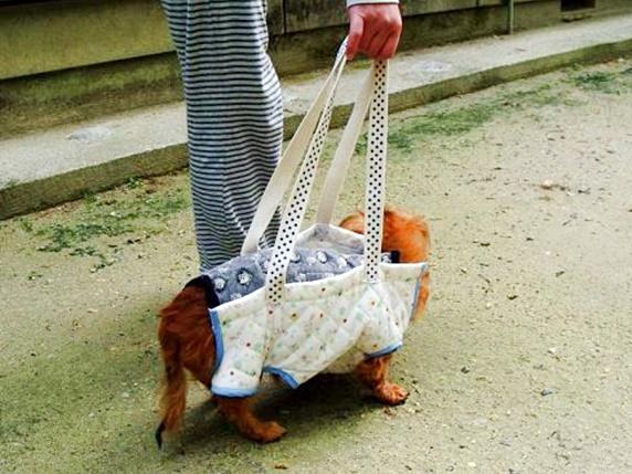 歩行補助ハーネスを付けて歩くミニチュアダックスフンド