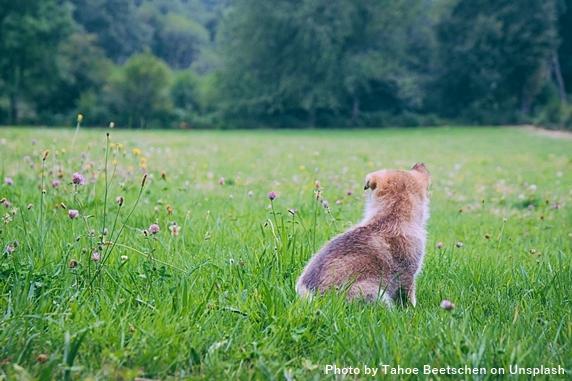 広い芝生の上でちょこんと座る子犬の後ろ姿