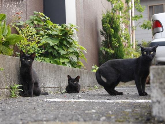 野良の黒猫親子3匹