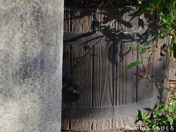 陰に隠れる黒猫
