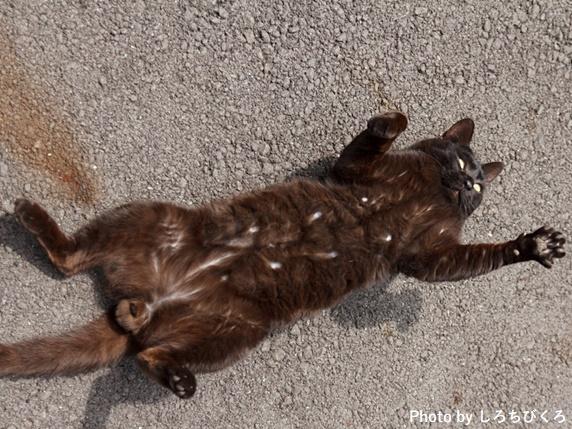 へそ天で寝る黒猫