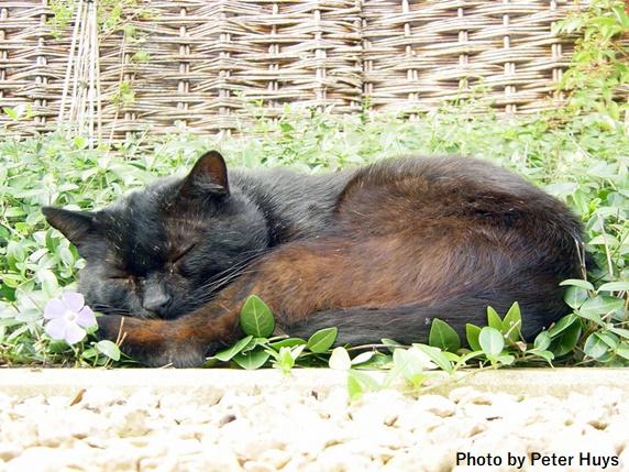 草の中で眠る黒猫