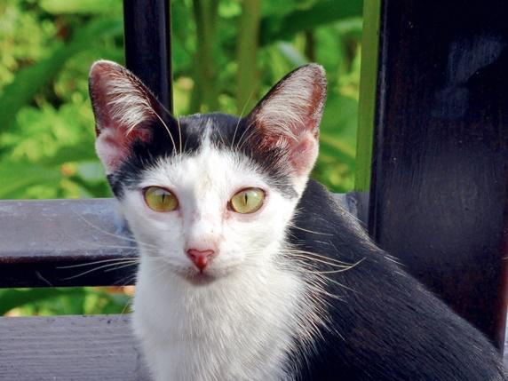 おかっぱのような模様の猫