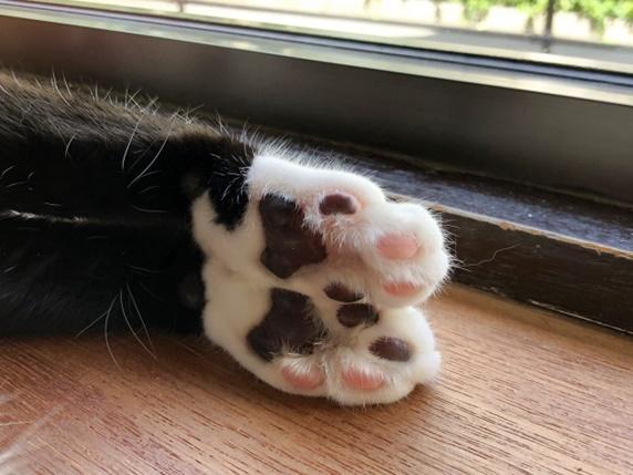 足先が白い柄の猫の肉球