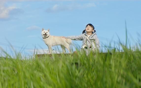 映画「駅までの道をおしえて」土手に座る女の子と白い柴犬