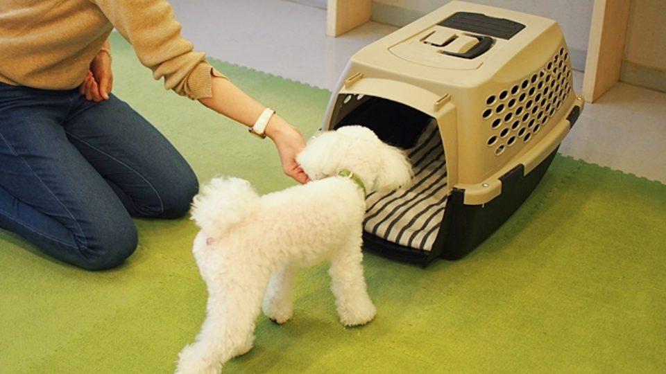 成犬からでもできる!犬のクレート(ケージ)トレーニングの方法|行動学専門の獣医師が解説
