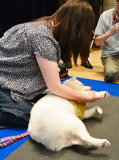 teamHOPEシニア犬の健康を考えるセミナー参加者と犬