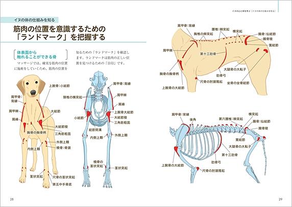 「ドッグマッサージ 実践テクニックBOOK」p28-29