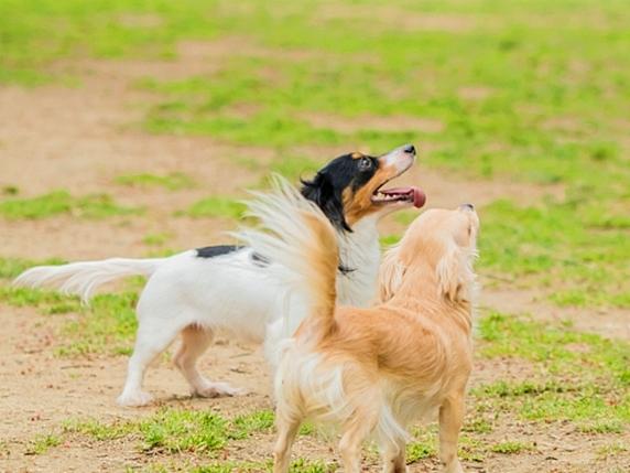 草むらの上で自由に走り回る2匹の犬
