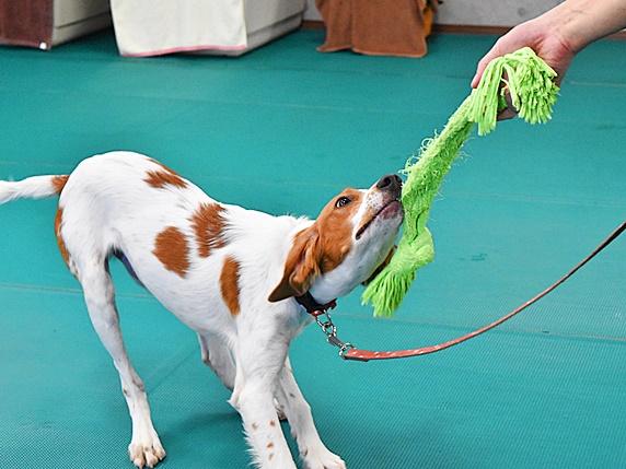 犬の人生に自信をつけていくノーズワーク
