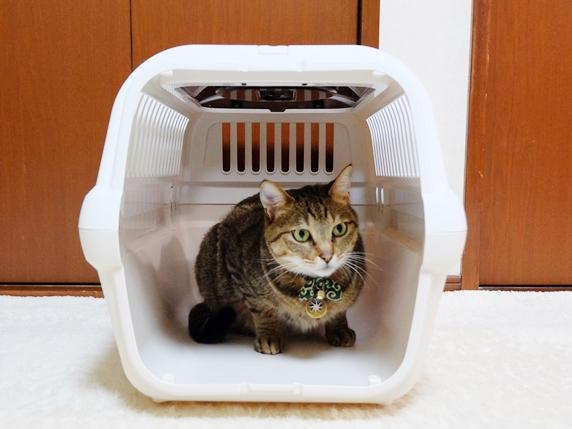 扉を外しキャリーの中でくつろぐ猫