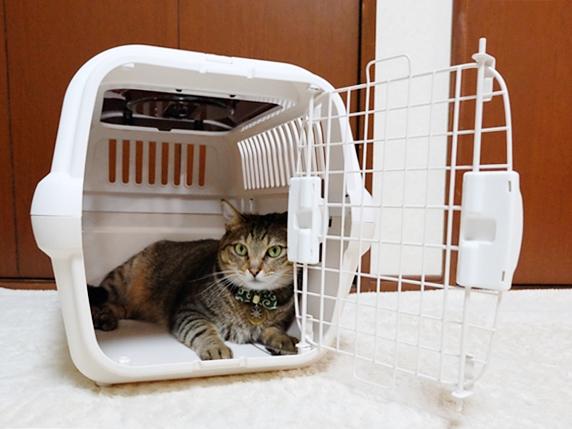 キャリーに扉を付けて練習する猫