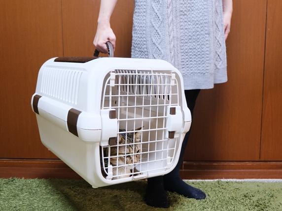 猫の入ったキャリーを持ち上げる飼い主さん