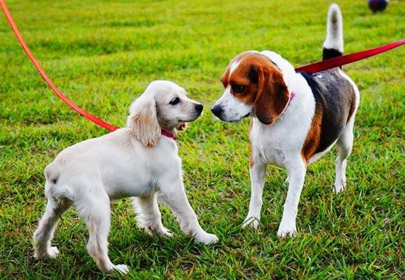 芝生で鼻を突き合わせて挨拶する2頭の犬