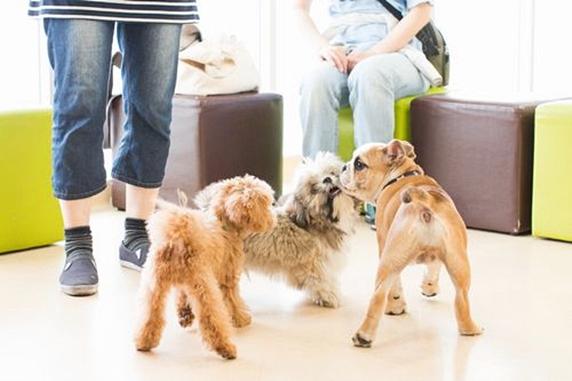 パピークラスで遊ぶ3匹の子犬と見守る飼い主