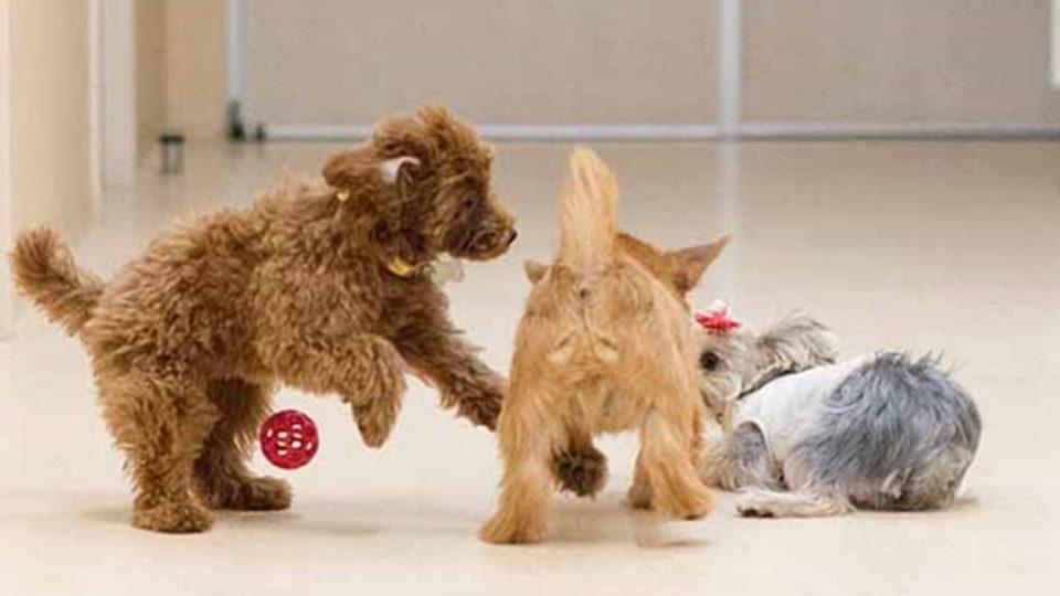 子犬の社会化トレーニングに最適!パピークラスってどんなところ?