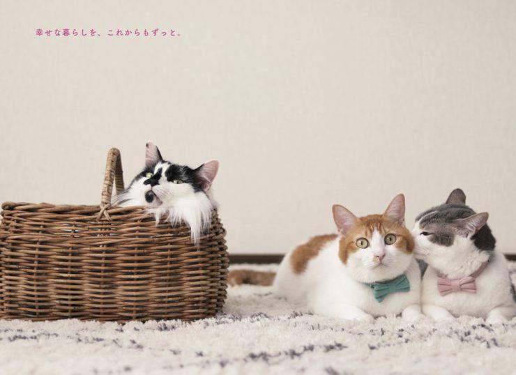 「猫からのおねがい」ページより3匹の猫