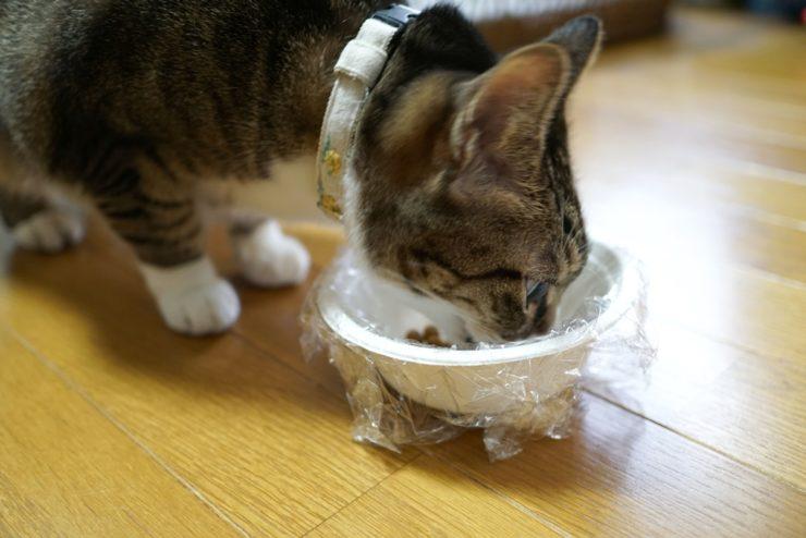 愛猫の避難時の食事を想定して自宅でシミュレーション