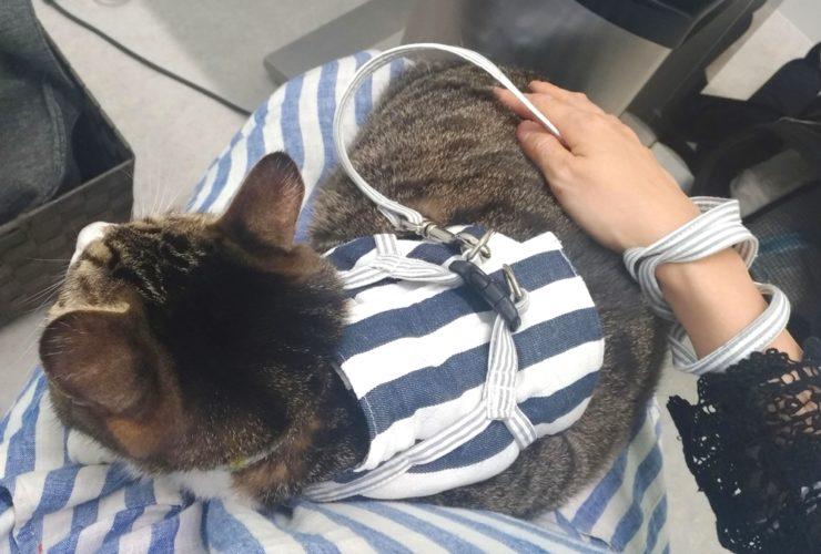 動物病院受診で愛猫をハーネス慣れさせる