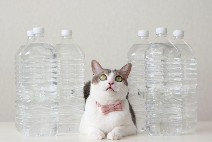「猫からのおねがい」ページ_備蓄ペットボトルの水と猫