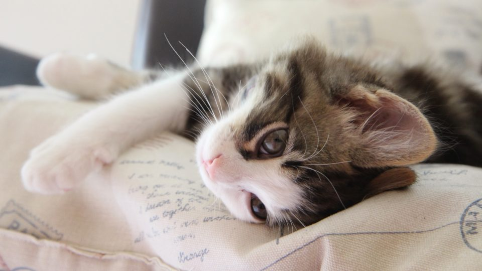 猫の病気・症状・健康管理