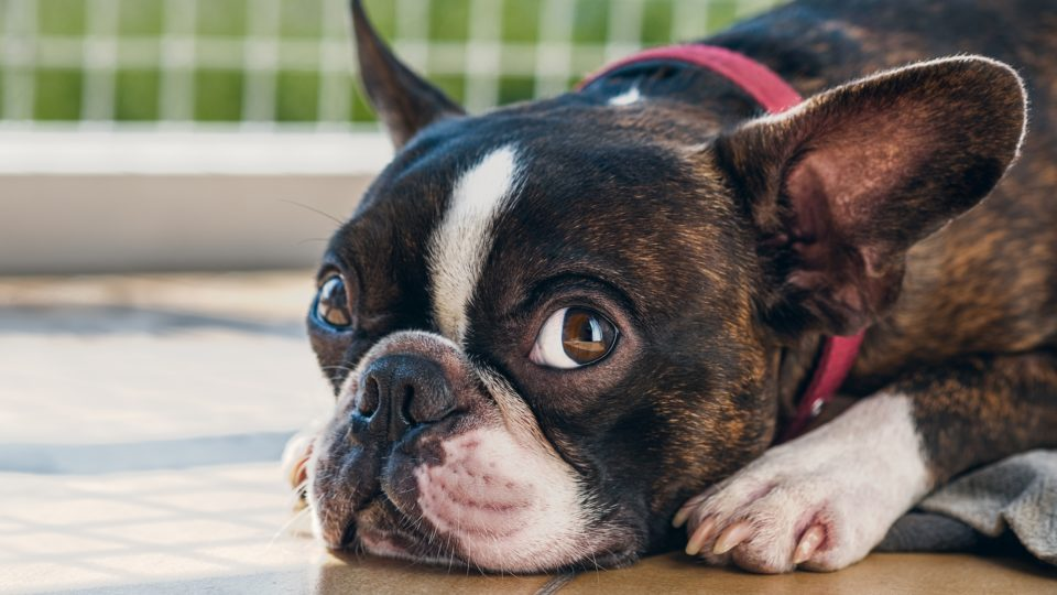 犬の病気・症状・健康管理