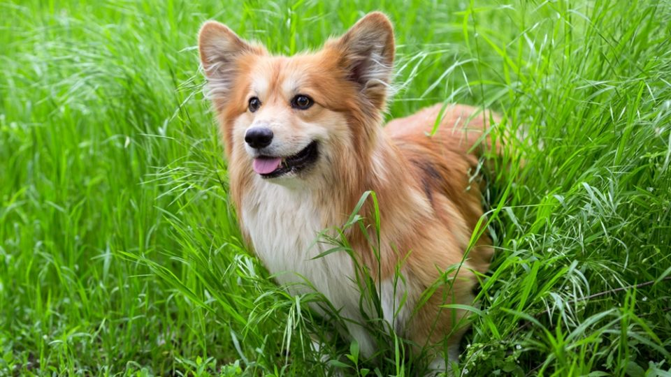 人の命に関わる感染症も。今こそ知っておきたい「愛犬のマダニ対策」を獣医師が徹底解説。