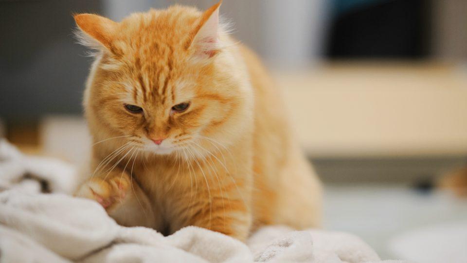猫が「ふみふみ」「スリスリ」する理由は?|行動学の専門獣医師が解説