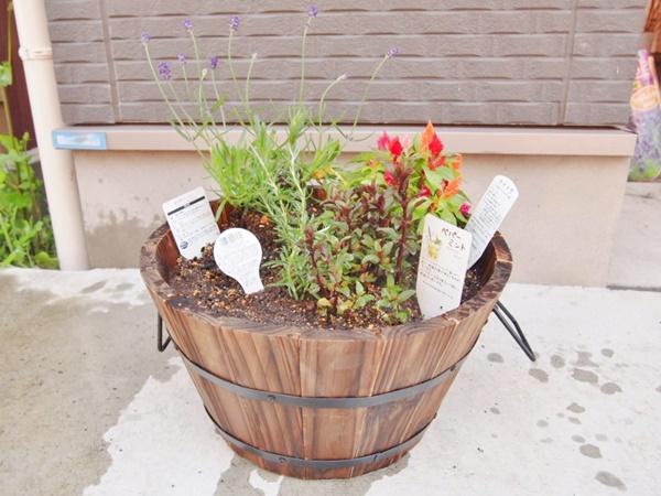 お骨は植木鉢に埋め、上に花を植えました